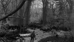 Overwelming woods